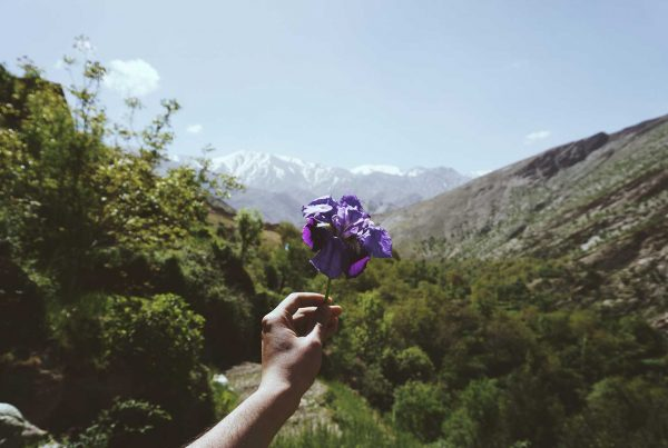 purple flower on the mountains